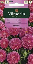 Astrovka činska Holderlin - Vilmorin