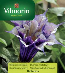 Durman metlový - Vilmorin
