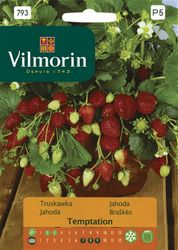 Jahoda TEMPTATION - Vilmorin