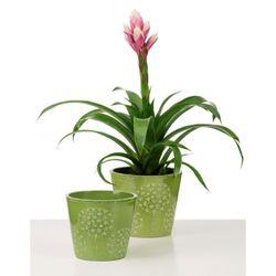 Keramický obal Bloomy green