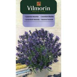 Levanduľa lekárska - Vilmorin