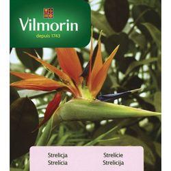 Strelícia - Vilmorin