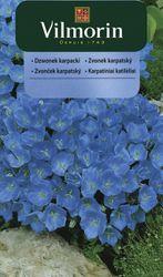 Zvonček karpatský - Vilmorin